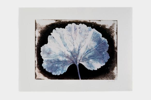 leaf-print-1