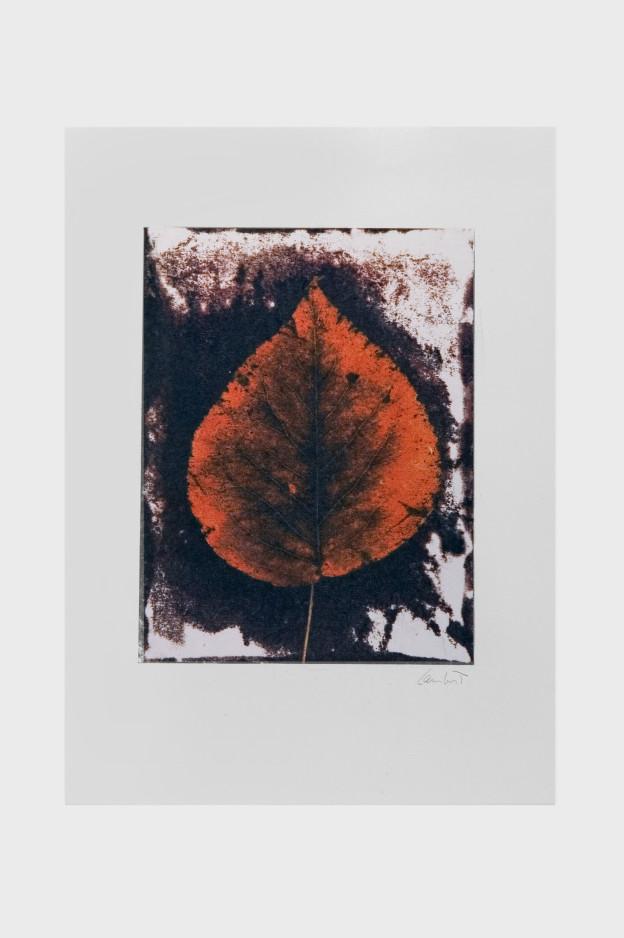 leaf-print-11