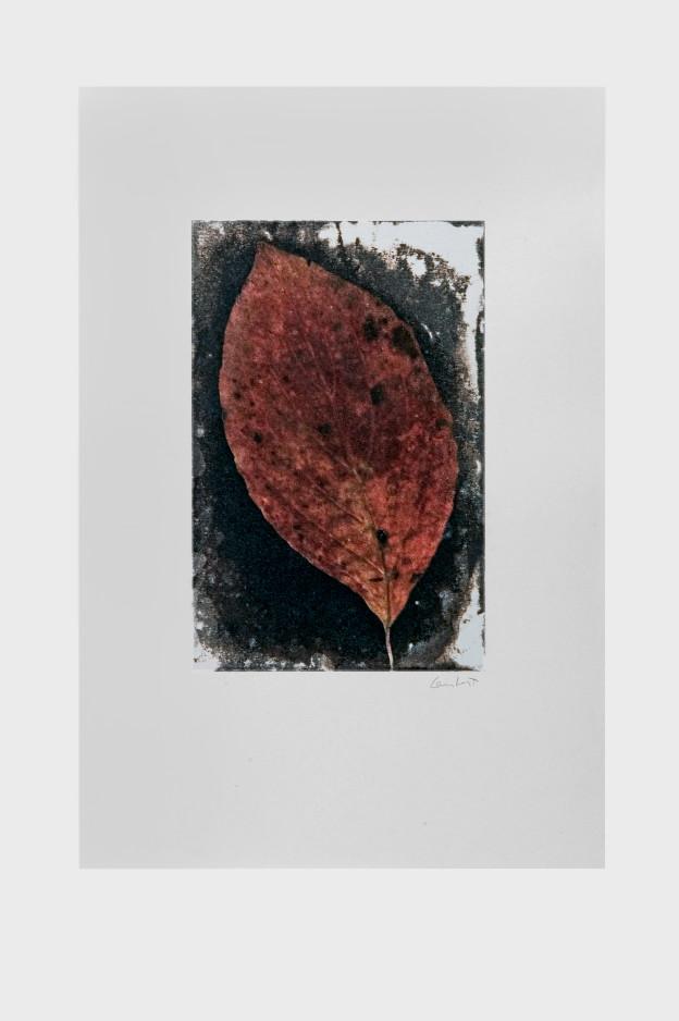 leaf-print-12