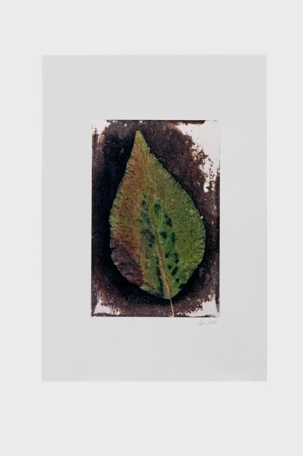 leaf-print-13
