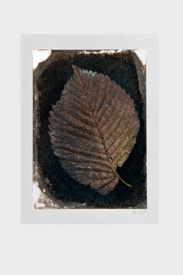 leaf-print-14