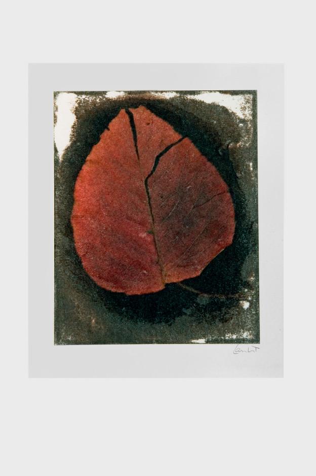 leaf-print-15