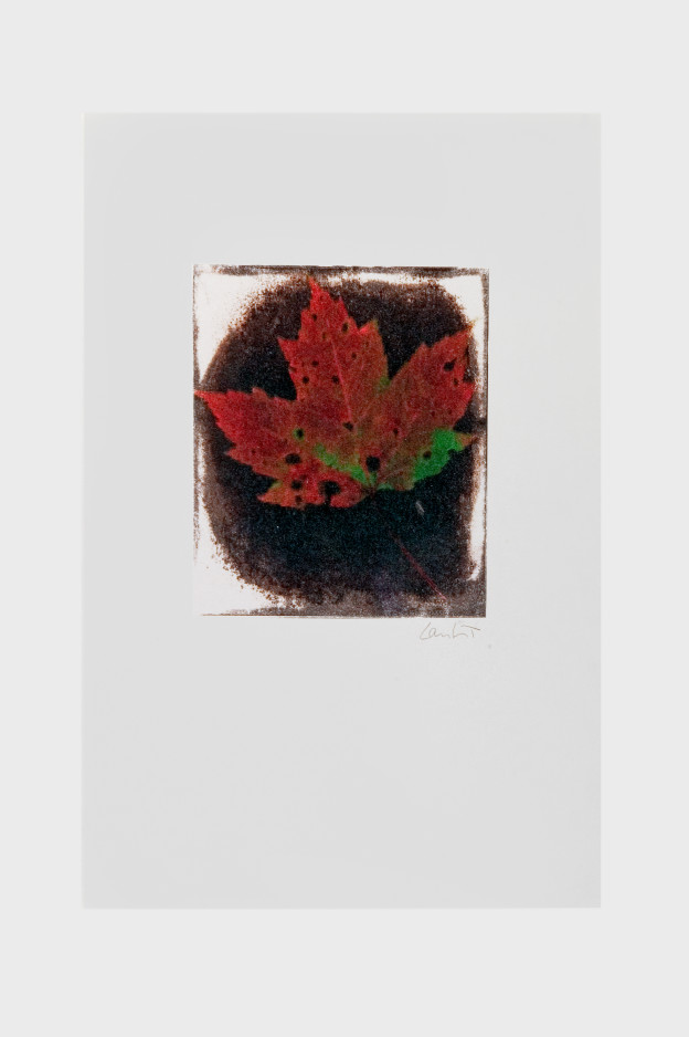leaf-print-16