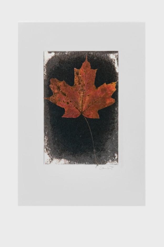 leaf-print-17