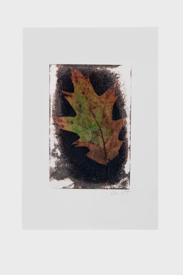 leaf-print-18