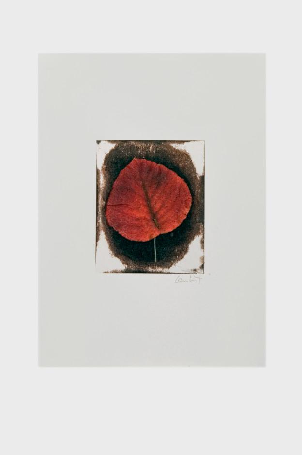 leaf-print-19