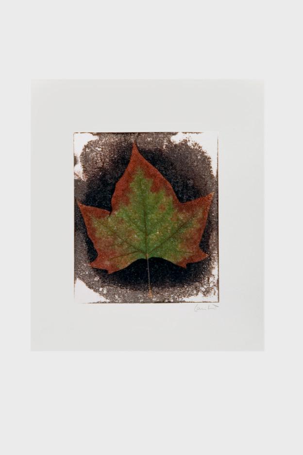 leaf-print-20