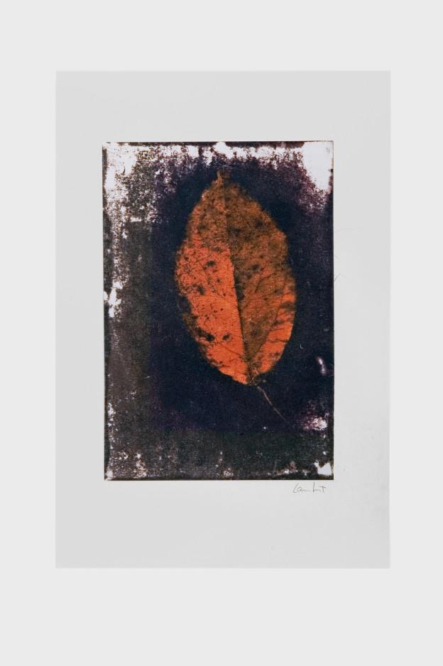 leaf-print-6