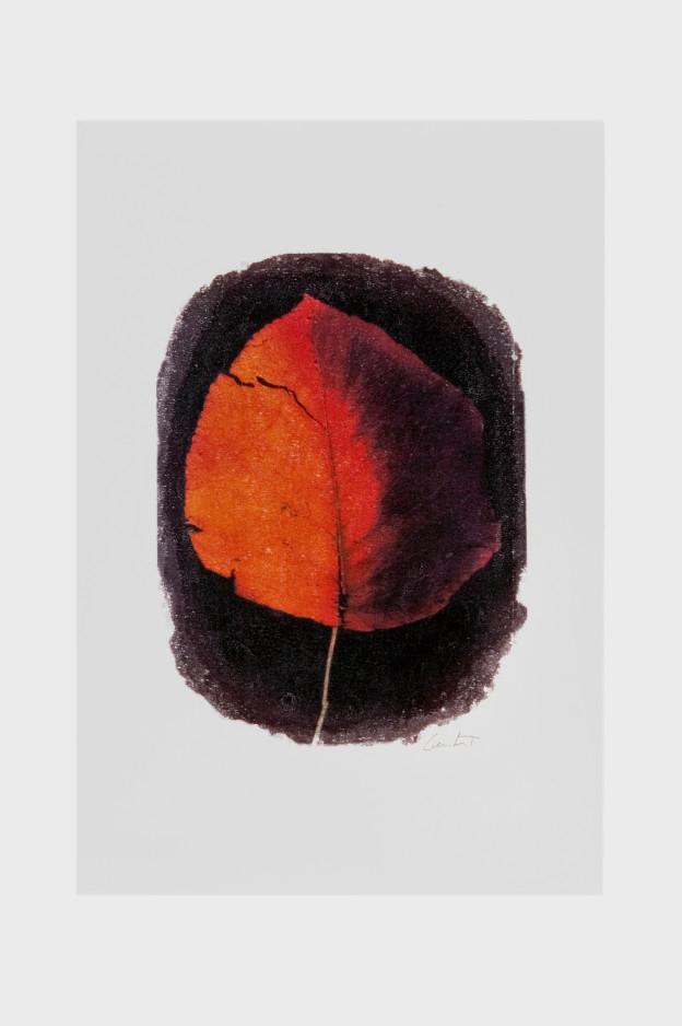 leaf-print-8
